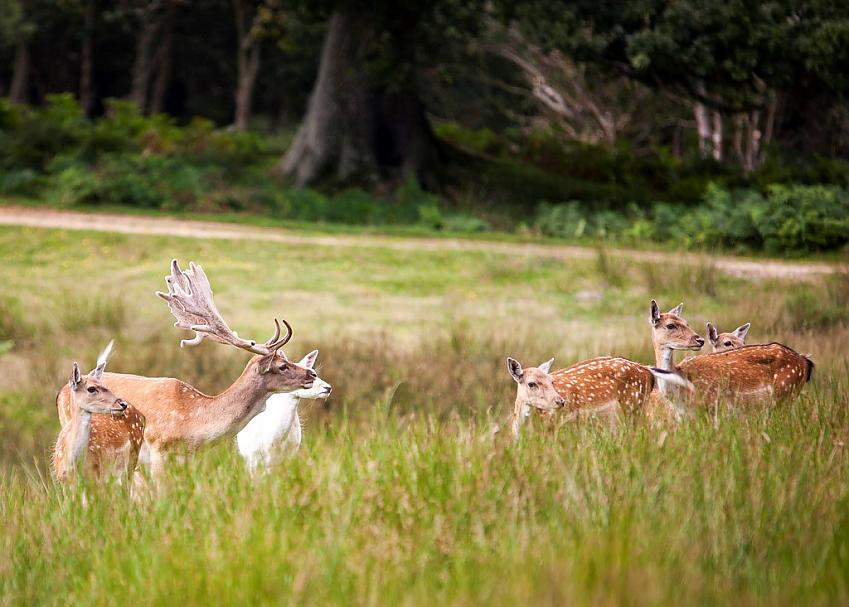 Deer Sanctuary in The New Forest