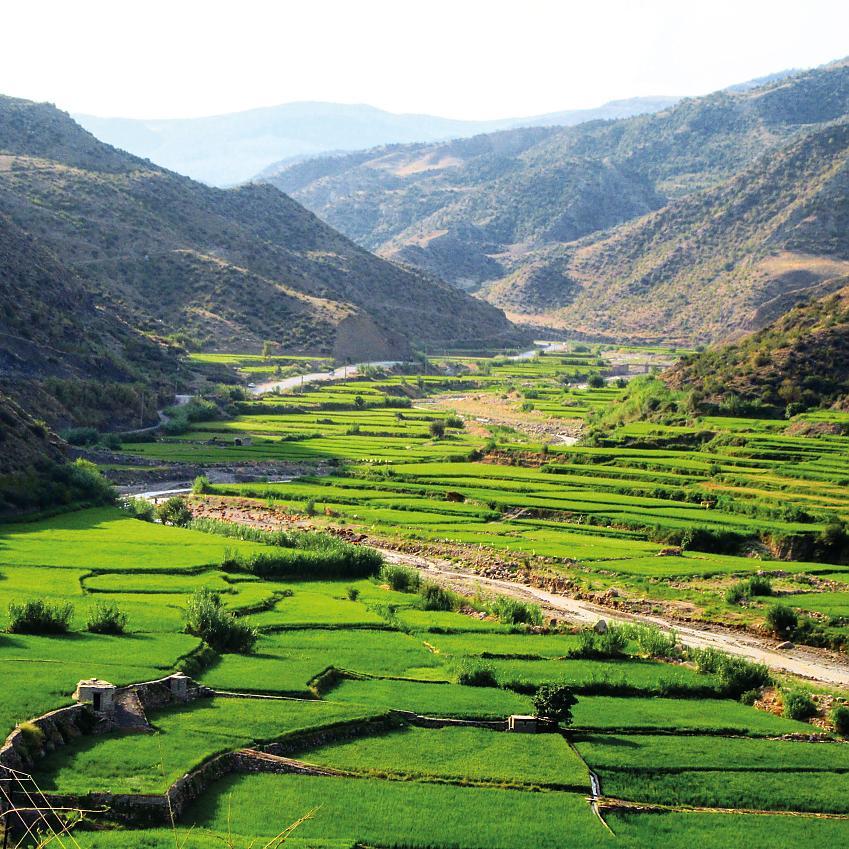 The scenery inIran'sGolestan National Park