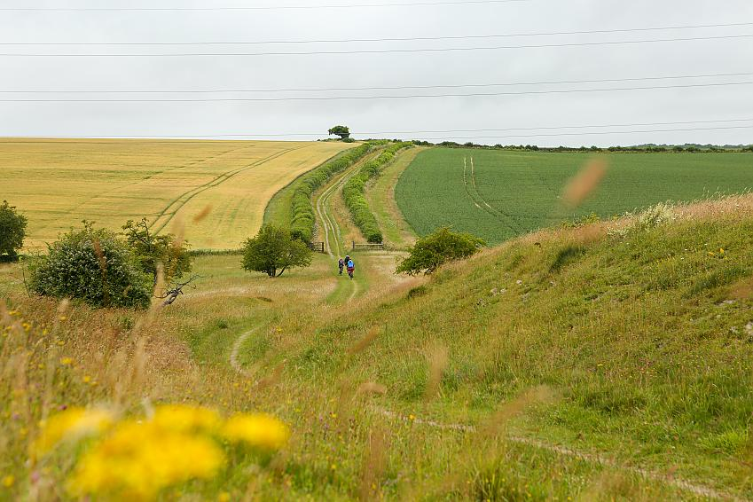 Several people ride bikes along a grassy trail through hills of golden fields
