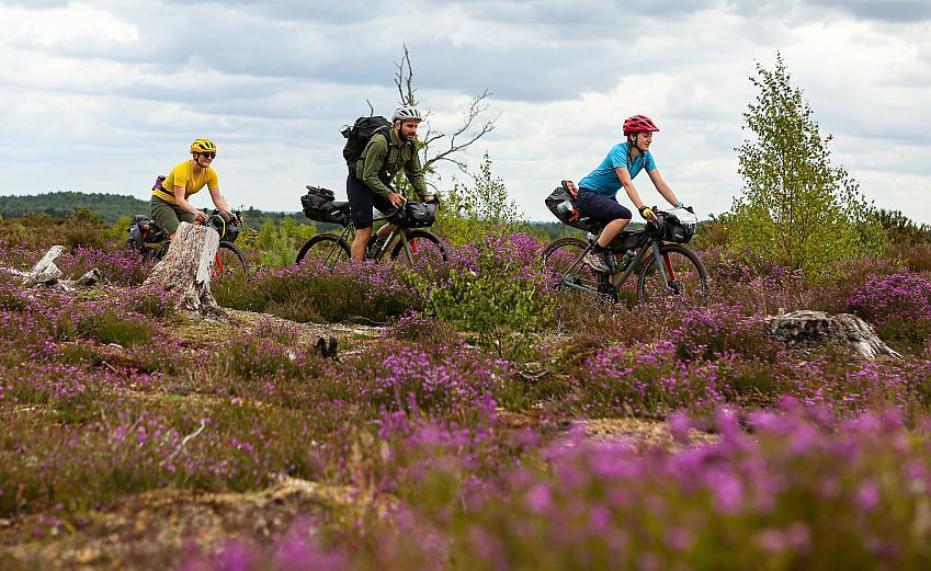 Three people riding gravel bikes across heather covered heathland
