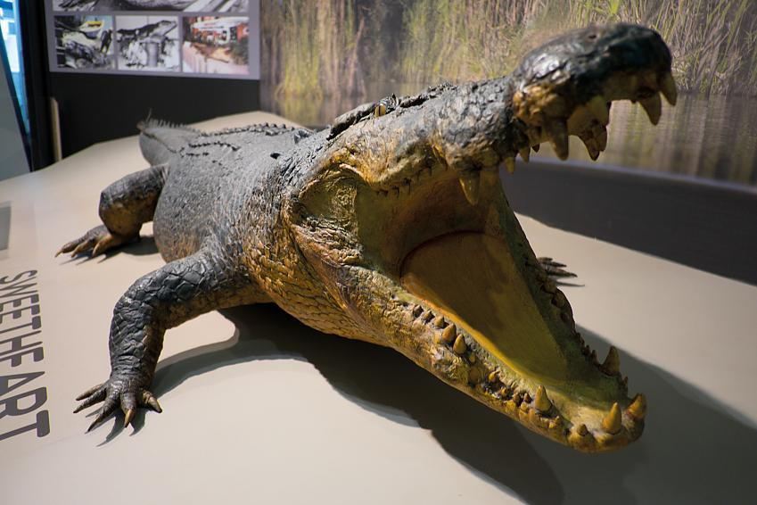 'Sweetheart', the croc at the Museum and Art Gallery of the Northern Territory, Darwin