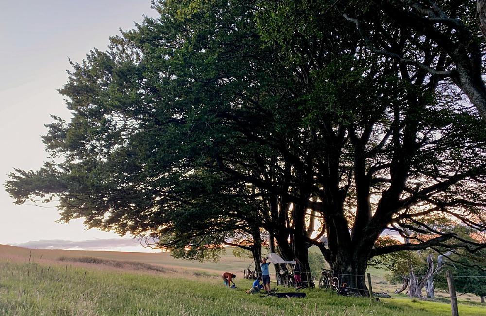 Bikepackers setting up camp beneath a tree